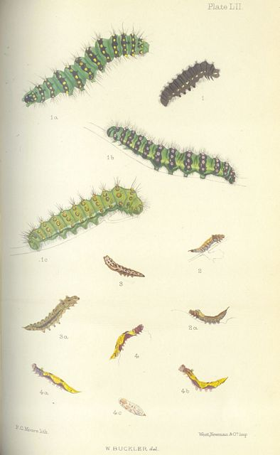 The Larvae of the British Butterflies and Moths.