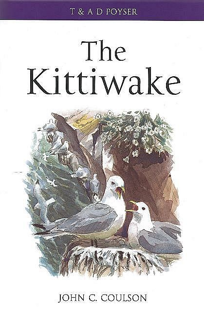 The Kittiwake.