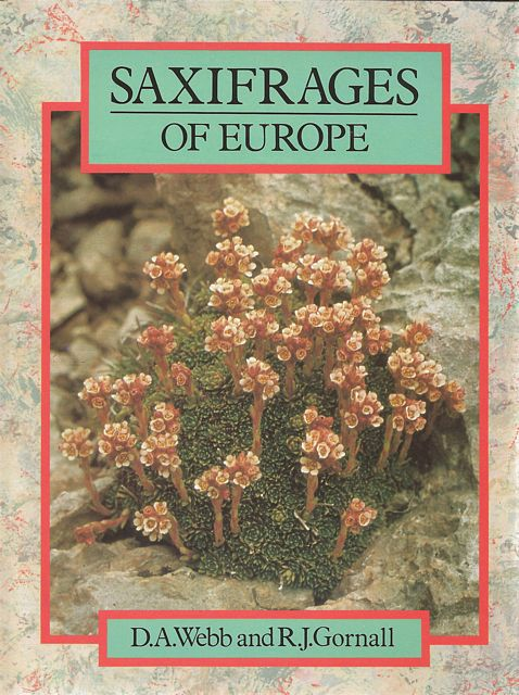 Saxifrages of Europe.