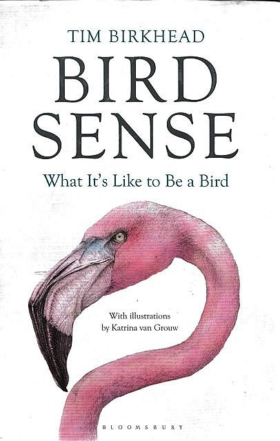 Review: Bird Sense: What it's Like to be a Bird, by Tim Birkhead