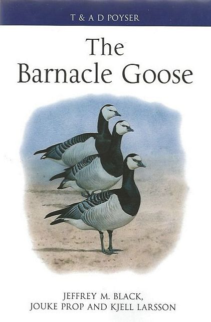 The Barnacle Goose.