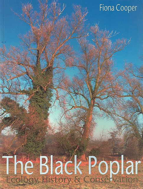 The Black Poplar.