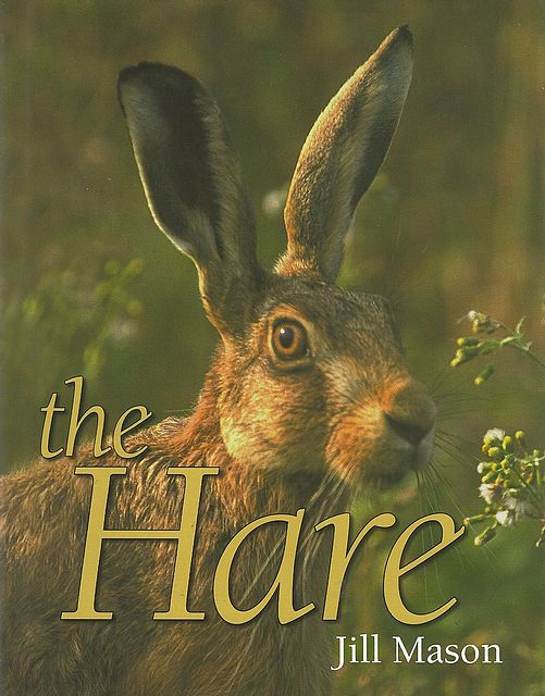 The Hare.