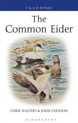 The Common Eider.