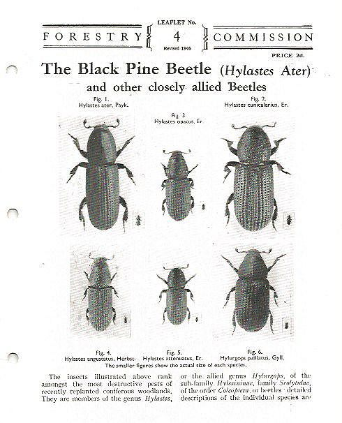 The Black Pine Beetle (Hylastes Ater) and Other Closely Allied Beetles.