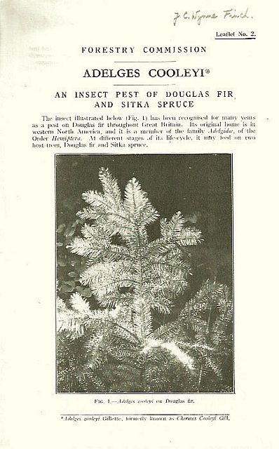 Adelges Cooleyi. An Insect Pest of Douglas Fir and Sitka Spruce.
