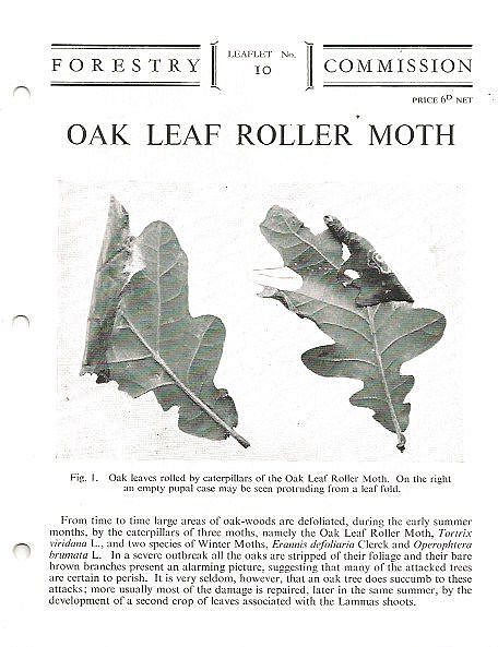 Oak Leaf Roller Moth.