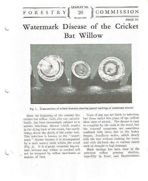 Watermark Disease of the Cricket Bat Willow.