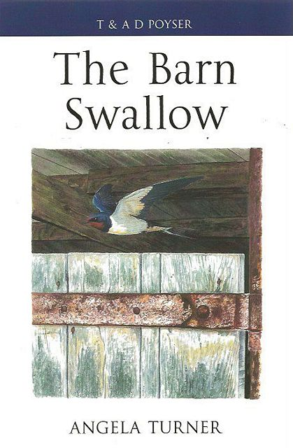 The Barn Swallow.