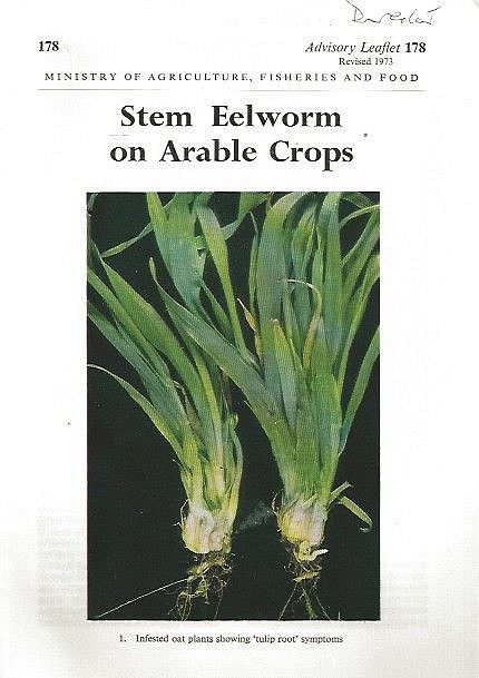 Stem Eelworm on Arable Crops.