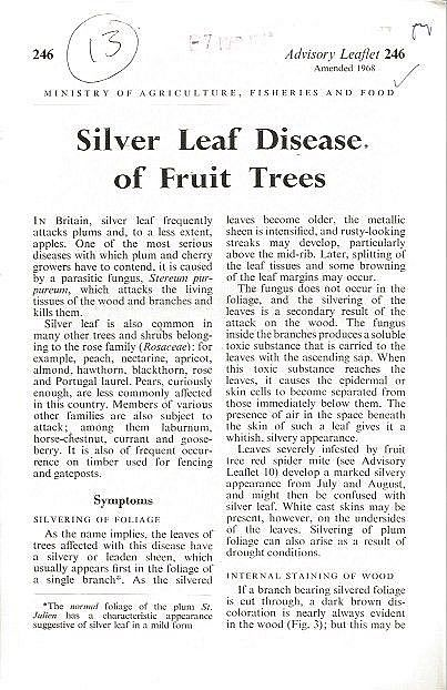 Silver Leaf Disease of Fruit Trees.