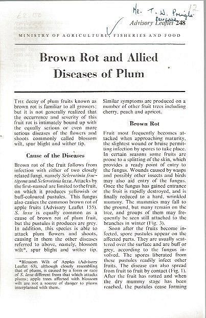 Brown Rot and Allied Diseases of Plum.