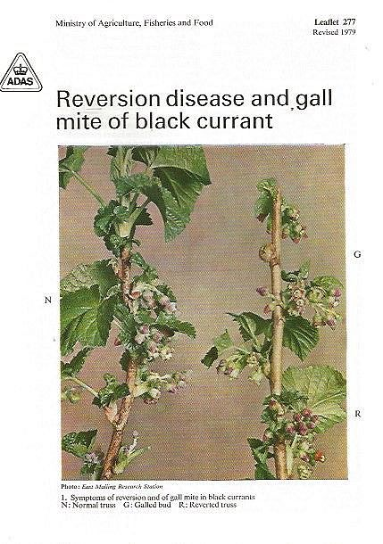 Reversion Disease and Gall Mite of Black Currant.