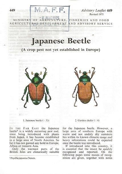 Japanese Beetle. (A crop pest not yet established in Europe).