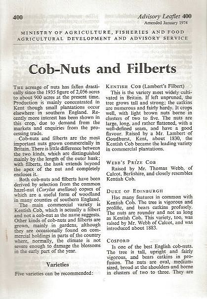 Cob-Nuts and Filberts.