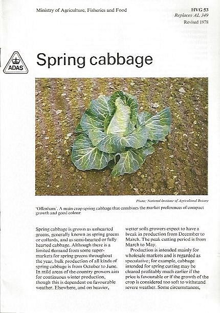 Spring Cabbage.
