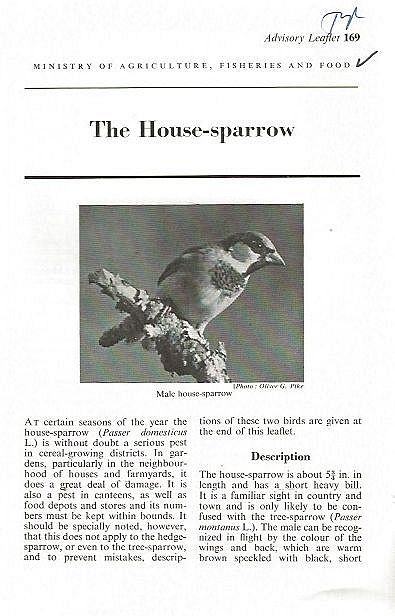 The House-sparrow.