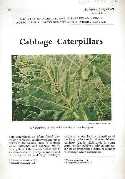 Cabbage Caterpillars.