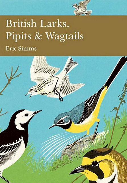 British Larks, Pipits and Wagtails.