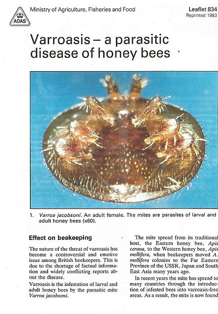 Varroasis - a parasitic disease of honey bees.