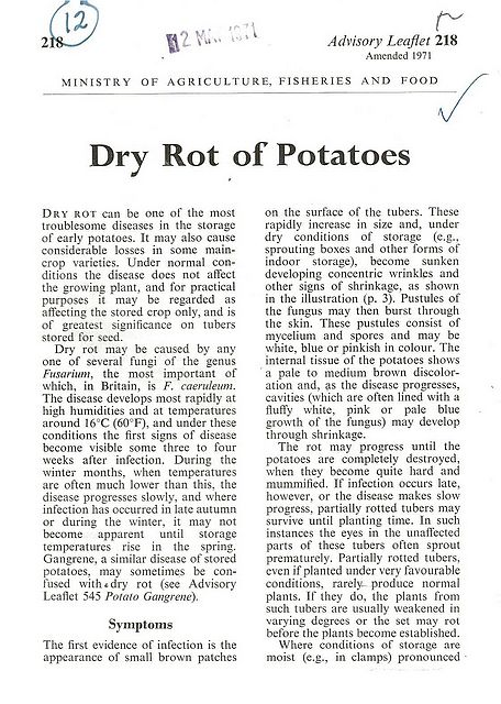 Dry Rot of Potatoes.