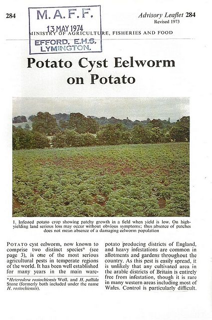 Potato Cyst Eelworm on Potato.