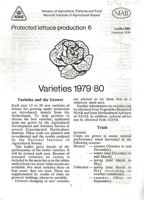 Protected Lettuce Production 6 - Varieties 1979-80.