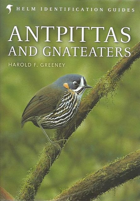Antpittas and Gnateaters.