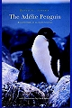 The Adelie Penguin.