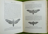 An Illustrated Natural History of British Butterflies and Moths.