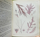 A Popular History of British Sea-Weeds.