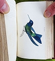 The Natural History of Humming-birds.
